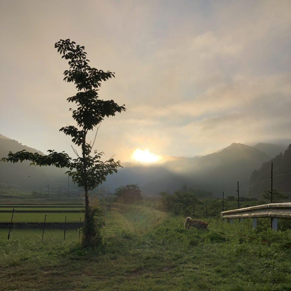 柴犬と朝日