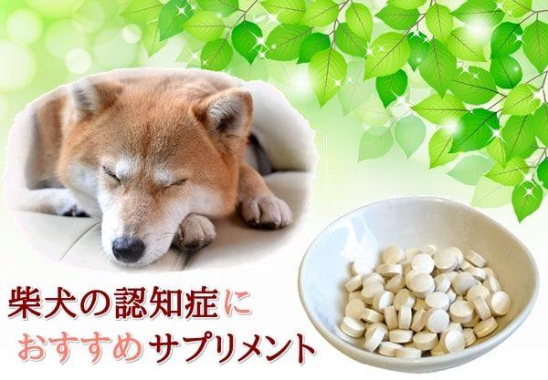 柴犬認知症予防サプリメントおすすめ