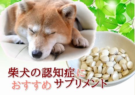 犬用認知症予防サプリメントおすすめ